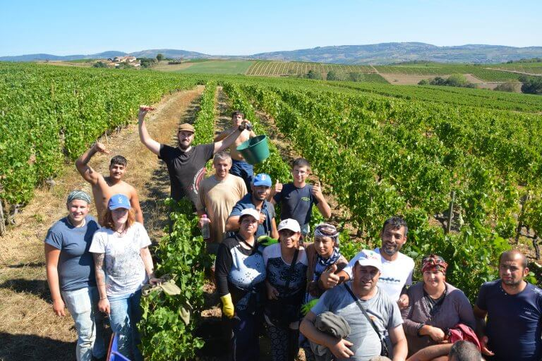 EMPLOYMENT | Grape picking in France